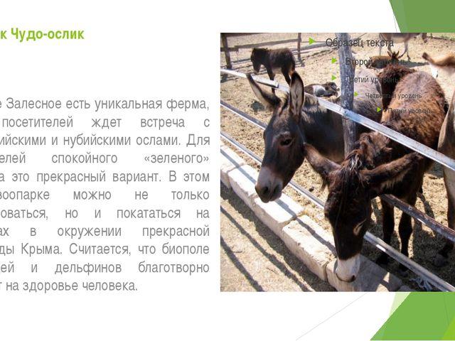 Зоопарк Чудо-ослик В селе Залесное есть уникальная ферма, где посетителей жде...