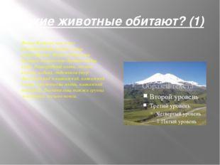 Какие животные обитают? (1) Фауна Кавказа, как и его растительный покров, оче
