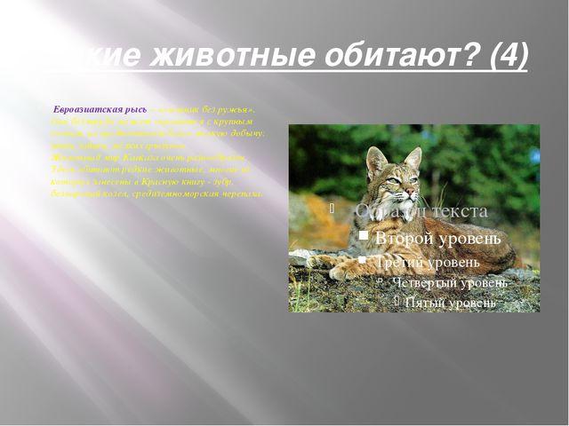 Какие животные обитают? (4) Евроазиатская рысь– «охотник без ружья». Она бе...