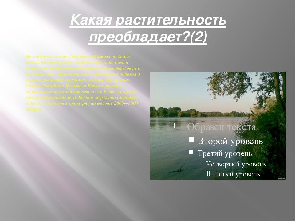 Какая растительность преобладает?(2) На северных склонах Большого Кавказа на...
