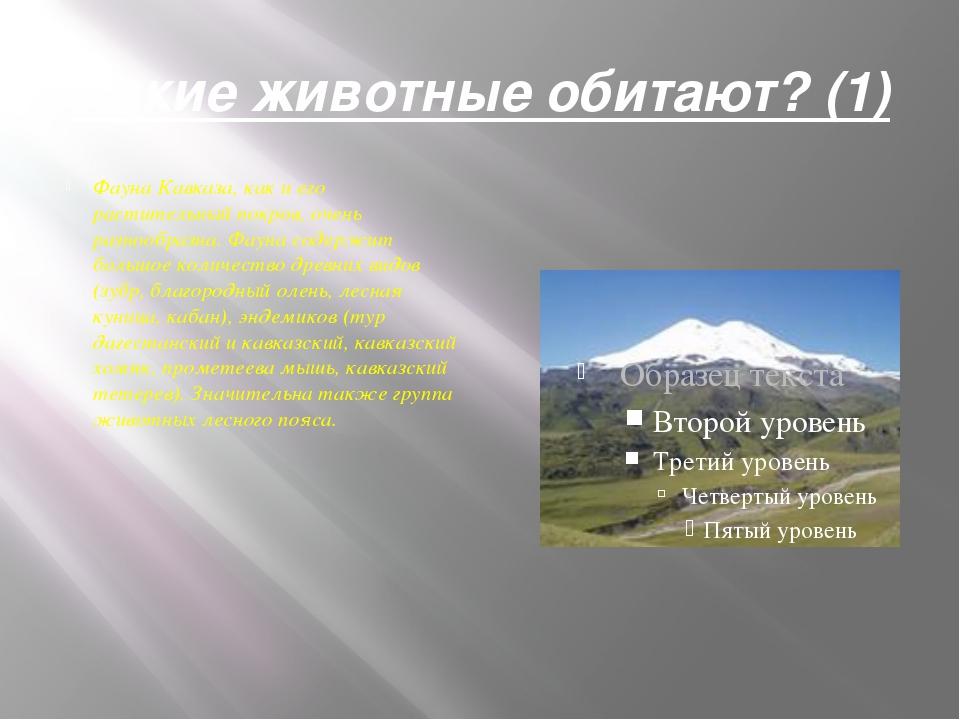 Какие животные обитают? (1) Фауна Кавказа, как и его растительный покров, оче...