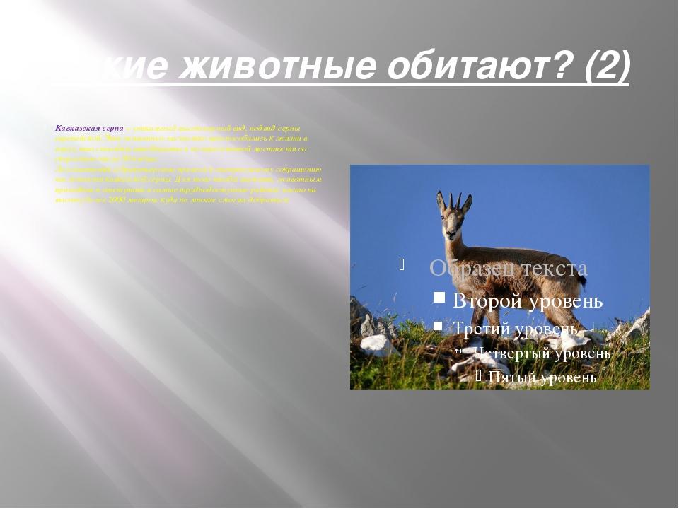 Какие животные обитают? (2) Кавказская серна– уникальный высокогорный вид, п...