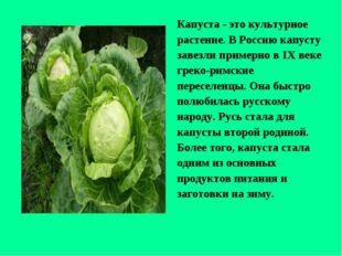 Капуста - это культурное растение. В Россию капусту завезли примерно в IХ век
