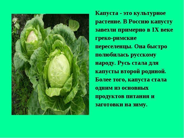 Капуста - это культурное растение. В Россию капусту завезли примерно в IХ век...
