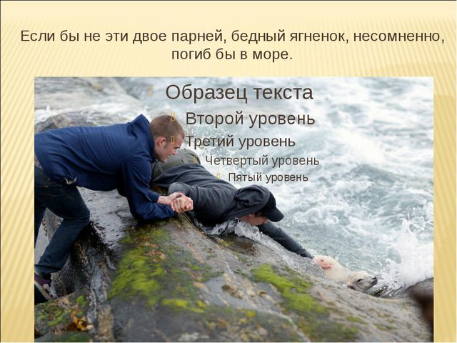Если бы неэтидвое парней, бедный ягненок, несомненно, погиб бы в море.