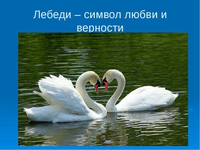 Лебеди – символ любви и верности