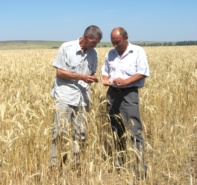 http://www.orenburzhie.ru/wp-content/uploads/2012/07/wheat.jpg