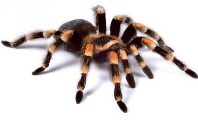 http://www.slavyarmarka.ru/image/data/slavanskiy-portal/stikers/spider.jpg