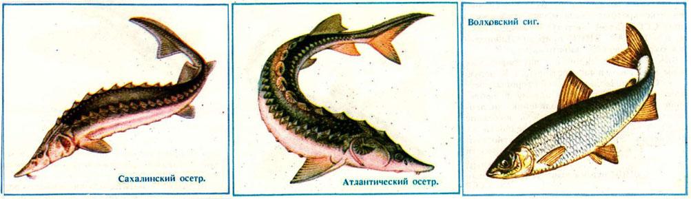http://www.ryblib.ru/uploads/posts/2012-02/1330083808_scr42-kopiya.jpg