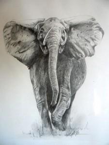 http://mmaxis.info/wp-content/uploads/2010/06/elephant-web-225x300.jpg