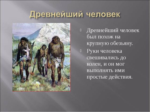 Древнейший человек был похож на крупную обезьяну. Руки человека свешивались д...
