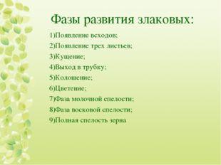 Фазы развития злаковых: Появление всходов; Появление трех листьев; Кущение; В