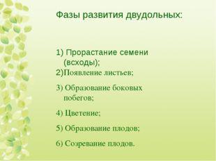 Фазы развития двудольных: 1) Прорастание семени (всходы); 2)Появление листьев