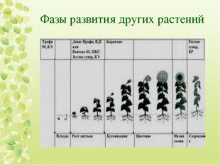 Фазы развития других растений