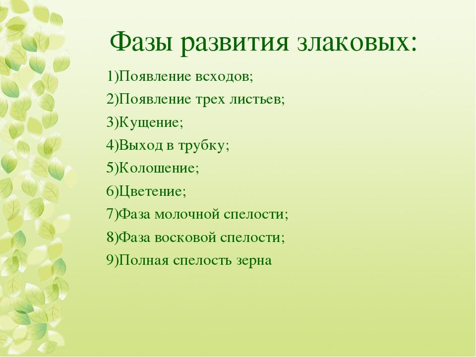 Фазы развития злаковых: Появление всходов; Появление трех листьев; Кущение; В...