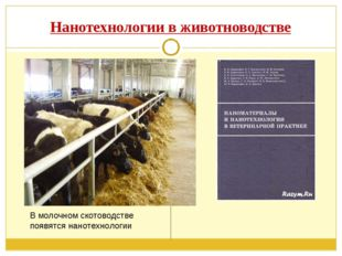 Нанотехнологии в животноводстве В молочном скотоводстве появятся нанотехнологии