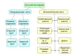 ЛЕСНОЙ ПИТОМНИК Продуцирующая часть Вспомогательная часть Посевное отделение