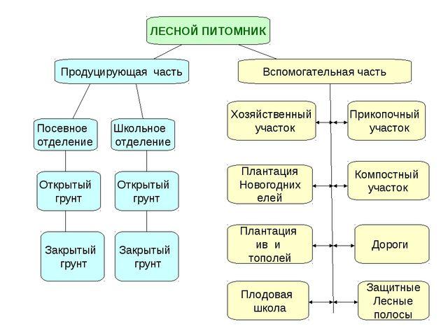 ЛЕСНОЙ ПИТОМНИК Продуцирующая часть Вспомогательная часть Посевное отделение...