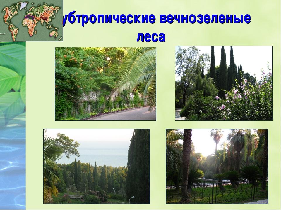 Субтропические вечнозеленые леса