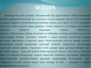 ФЛОРА Несмотря на своё название, Ичалковский бор представляет собой cмешанный