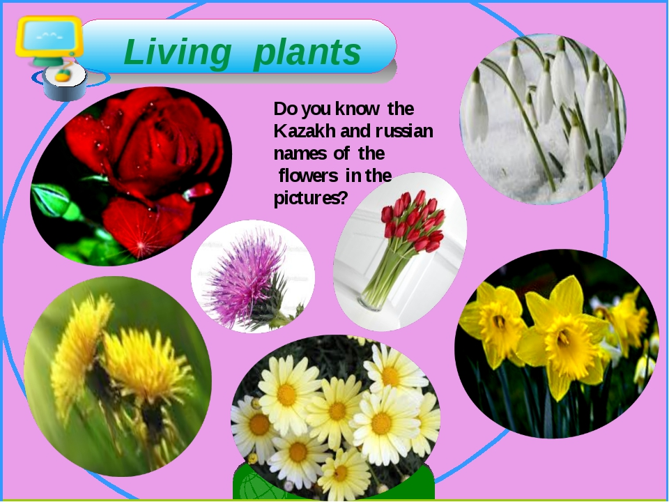 Living plants Do you know the Kazakh and russian names of the flowers in the...