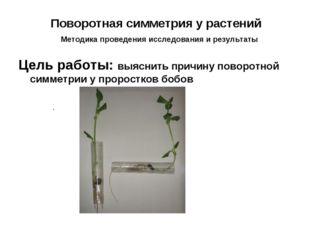 Поворотная симметрия у растений Методика проведения исследования и результаты