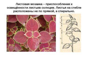 Листовая мозаика – приспособление к освещённости листьев солнцем. Листья на с