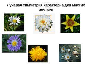 Лучевая симметрия характерна для многих цветков