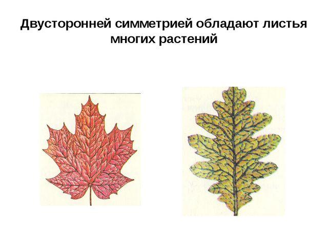 Двусторонней симметрией обладают листья многих растений