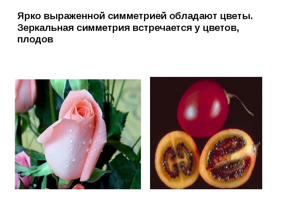 Ярко выраженной симметрией обладают цветы. Зеркальная симметрия встречается у...