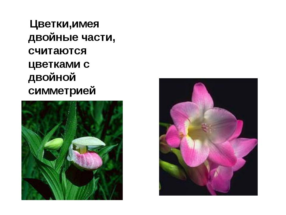 Цветки,имея двойные части, считаются цветками с двойной симметрией