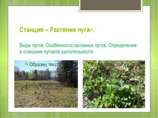 Станция « Растения луга». Виды лугов. Особенности заливных лугов. Определение