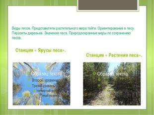 Виды лесов. Представители растительного мира тайги. Ориентирование в лесу. П