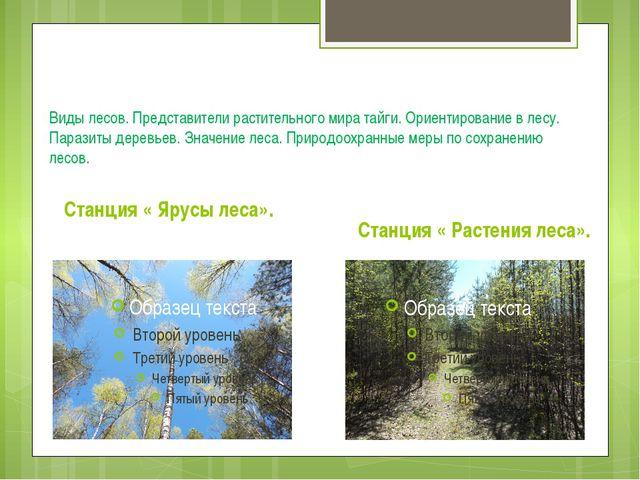 Виды лесов. Представители растительного мира тайги. Ориентирование в лесу. П...