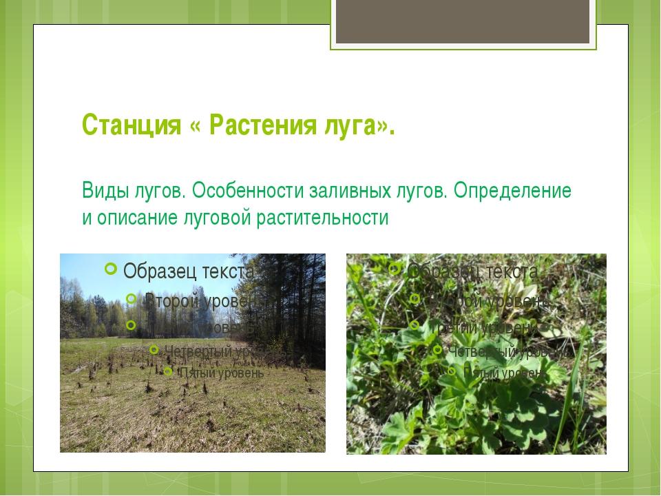 Станция « Растения луга». Виды лугов. Особенности заливных лугов. Определение...