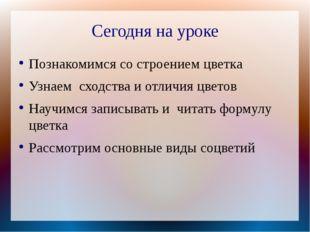 Сегодня на уроке Познакомимся со строением цветка Узнаем сходства и отличия ц