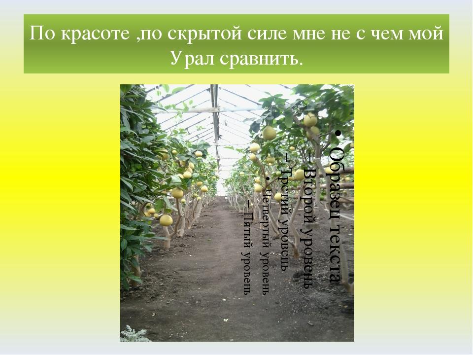 По красоте ,по скрытой силе мне не с чем мой Урал сравнить.