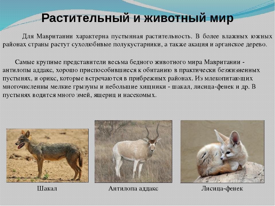 Растительный и животный мир Для Мавритании характерна пустынная растительност...