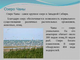Озеро Чаны Озеро Чаны - самое крупное озеро в Западной Сибири. Благодаря озер
