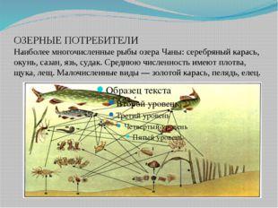 ОЗЕРНЫЕ ПОТРЕБИТЕЛИ Наиболее многочисленные рыбы озера Чаны: серебряный карас