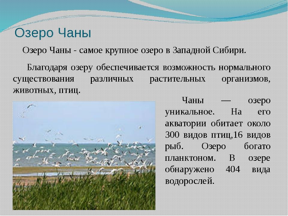 Озеро Чаны Озеро Чаны - самое крупное озеро в Западной Сибири. Благодаря озер...