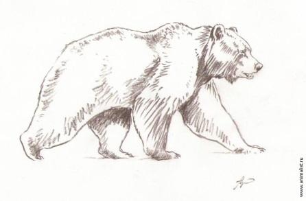 http://www.animalist.ru/images/antshkurko/03042010033214.jpg