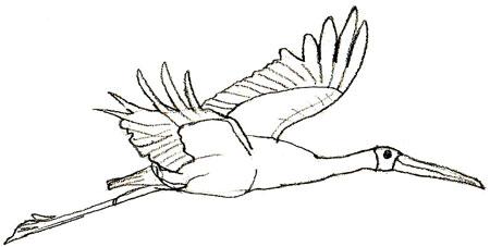 http://www.lookmi.ru/birds/risunok-aista-5.jpg