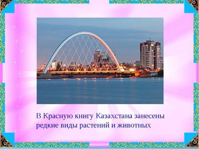 В Красную книгу Казахстана занесены редкие виды растений и животных