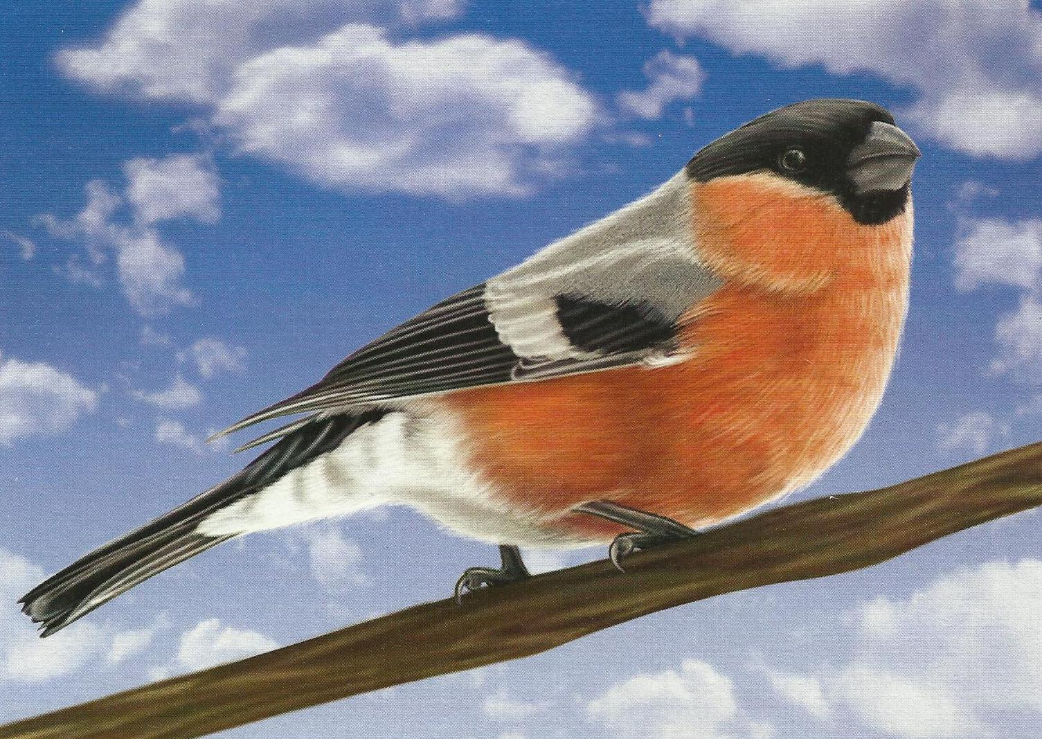 изображение птиц картинки религий индии