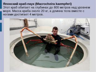 Японский краб-паук (Macrocheira kaempferi) Этот краб обитает на глубинах до 8