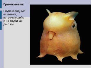 Гримпотевтис Глубоководный осьминог, встречающийся на глубинах до 6 км.