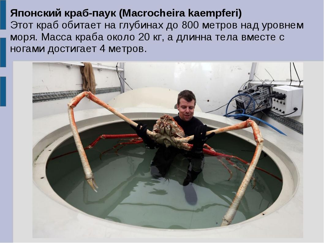 Японский краб-паук (Macrocheira kaempferi) Этот краб обитает на глубинах до 8...