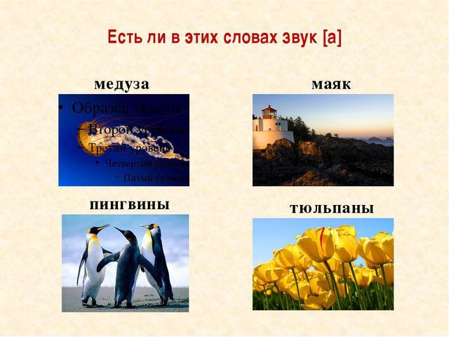 Есть ли в этих словах звук [а] медуза пингвины маяк тюльпаны