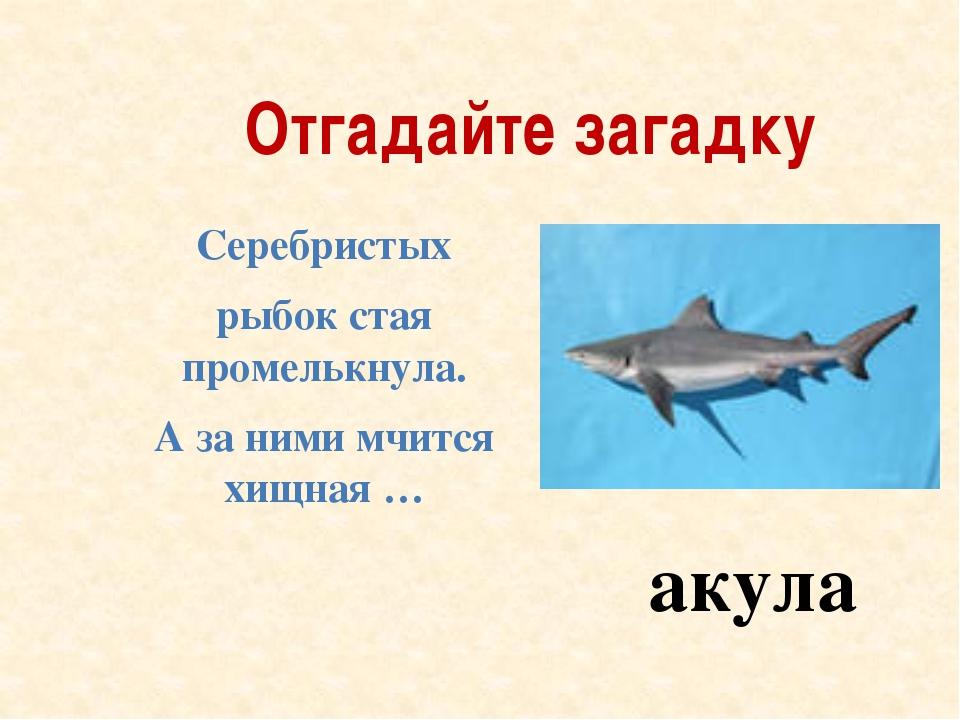 Отгадайте загадку Серебристых рыбок стая промелькнула. А за ними мчится хищна...